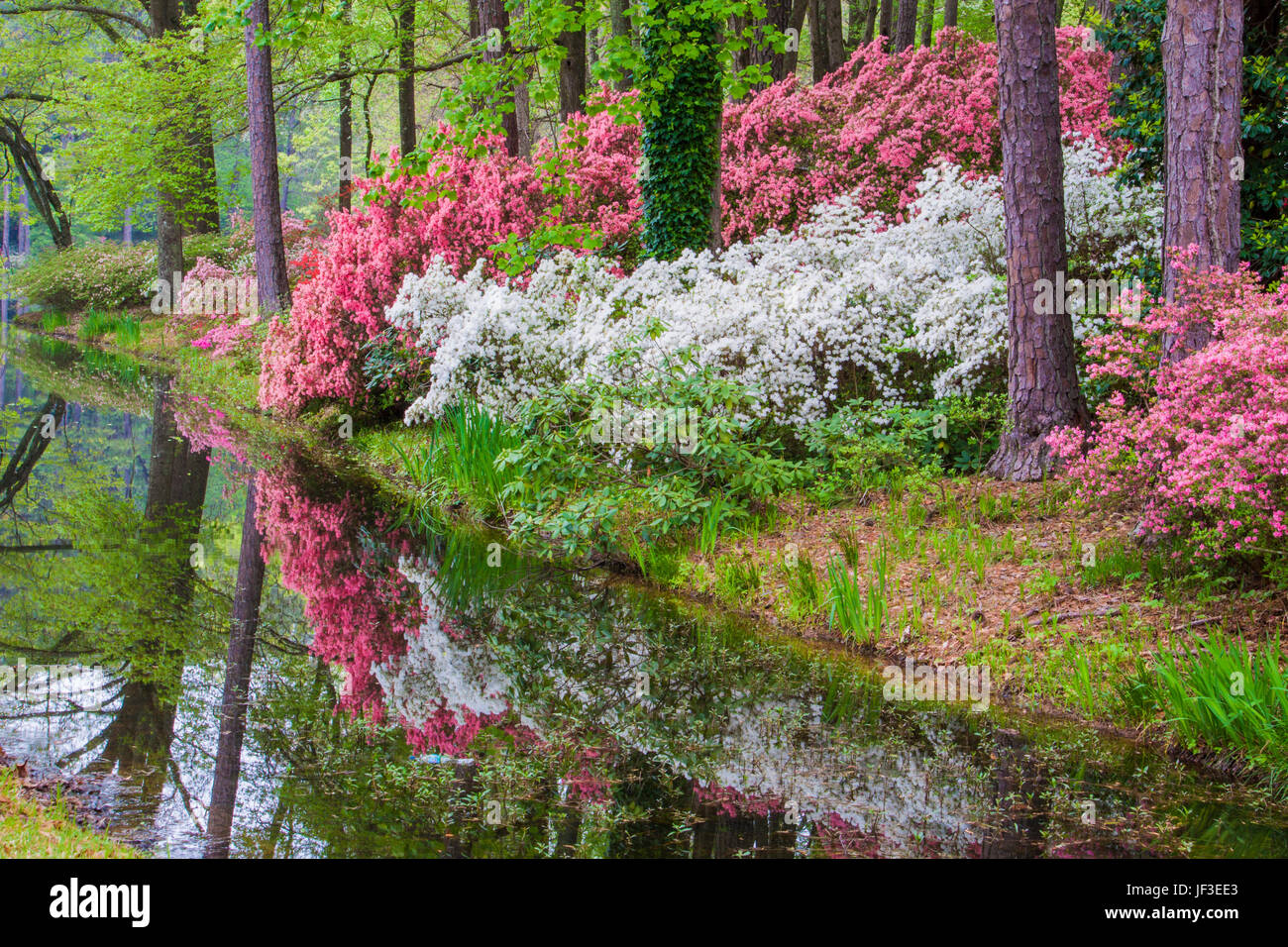 Azalea Overlook Garden At Callaway Gardens In Pine Mountain, Georgia. Callaway  Gardens, Famous For Its Azaleas, Boasts 13,000 Acres Of Gardens.