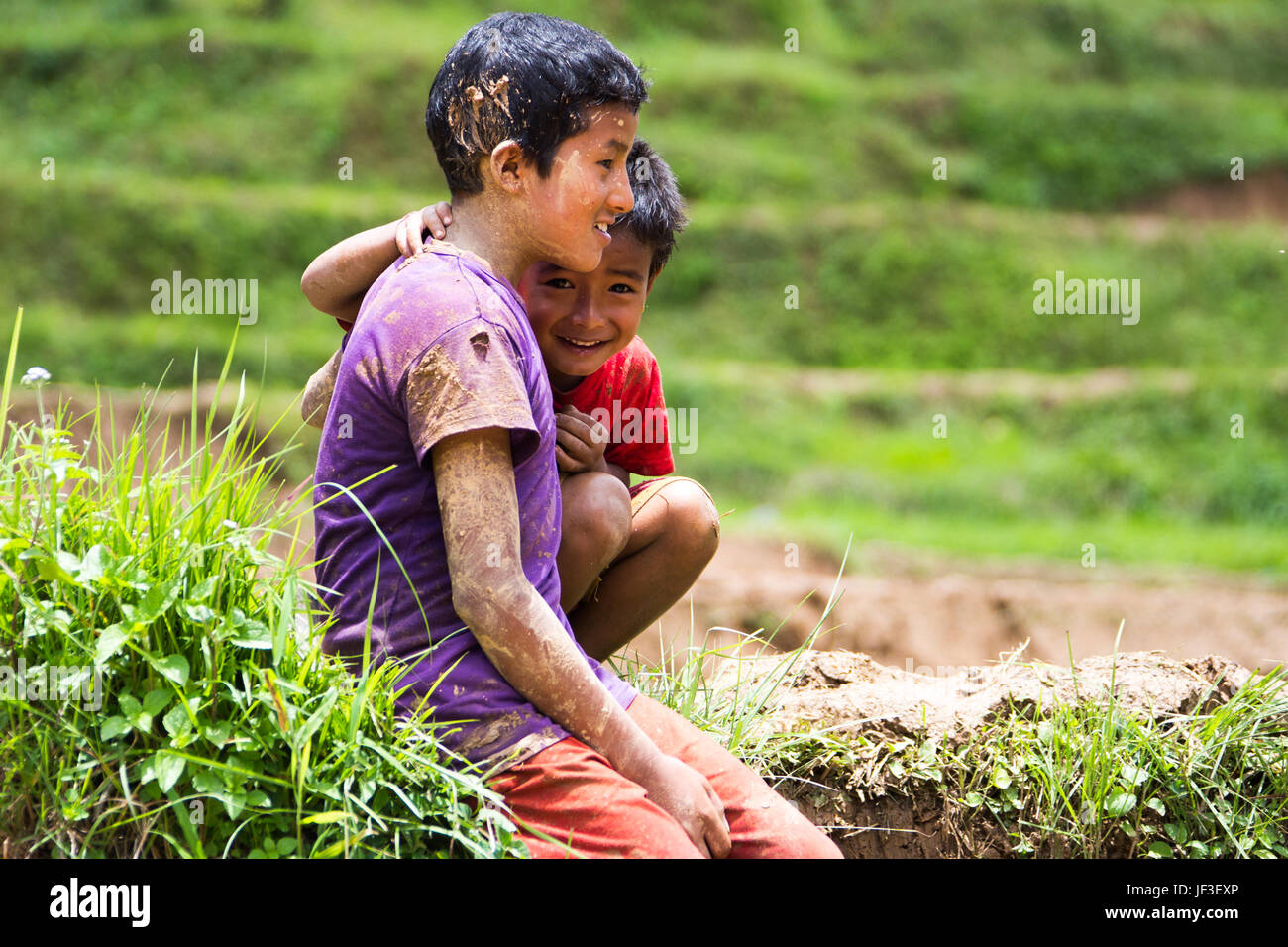 Nepali boys in a rice field, Nuwakot district, Nepal - Stock Image