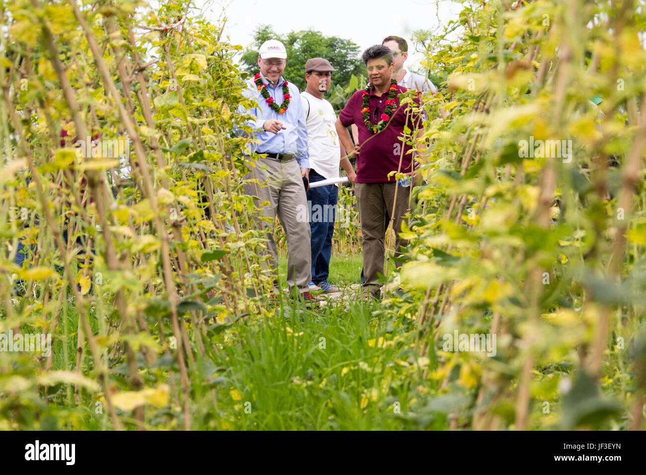 USAID Mission Director Peter Malnak asking questions about USAID funded organic peas in the Terai Region of Nepal - Stock Image