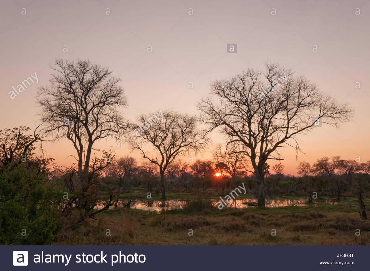 Sunrise over the Okavango delta. - Stock Image