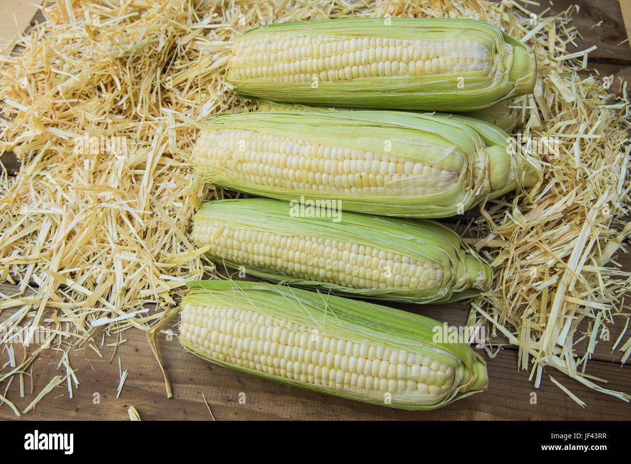 Fresh white  sweetcorn in their husks on a bed of straw - Stock Image