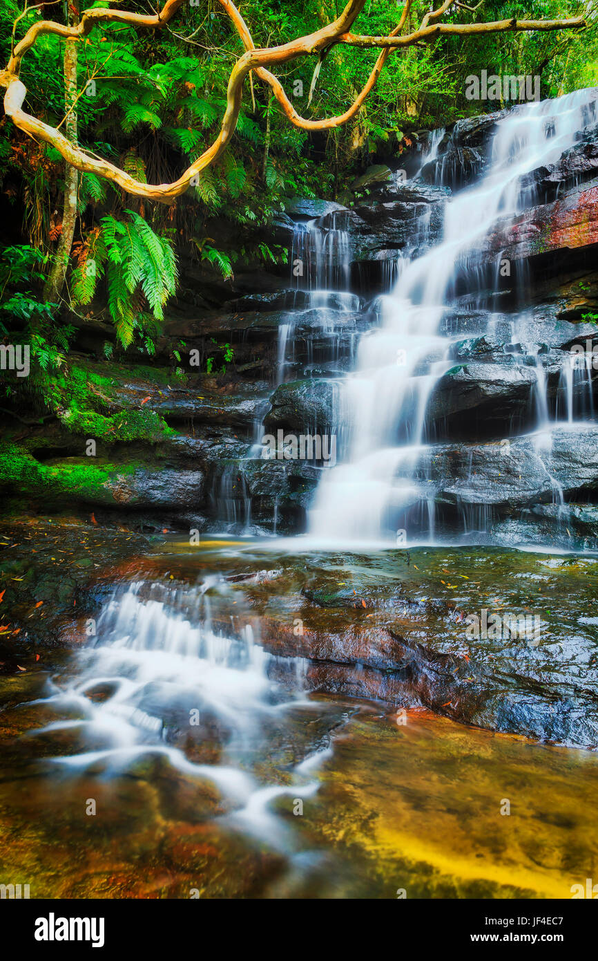 Colourful evergreen wet jungles around Somersby waterfall of Australian central coast. Flowing blurred water stream - Stock Image