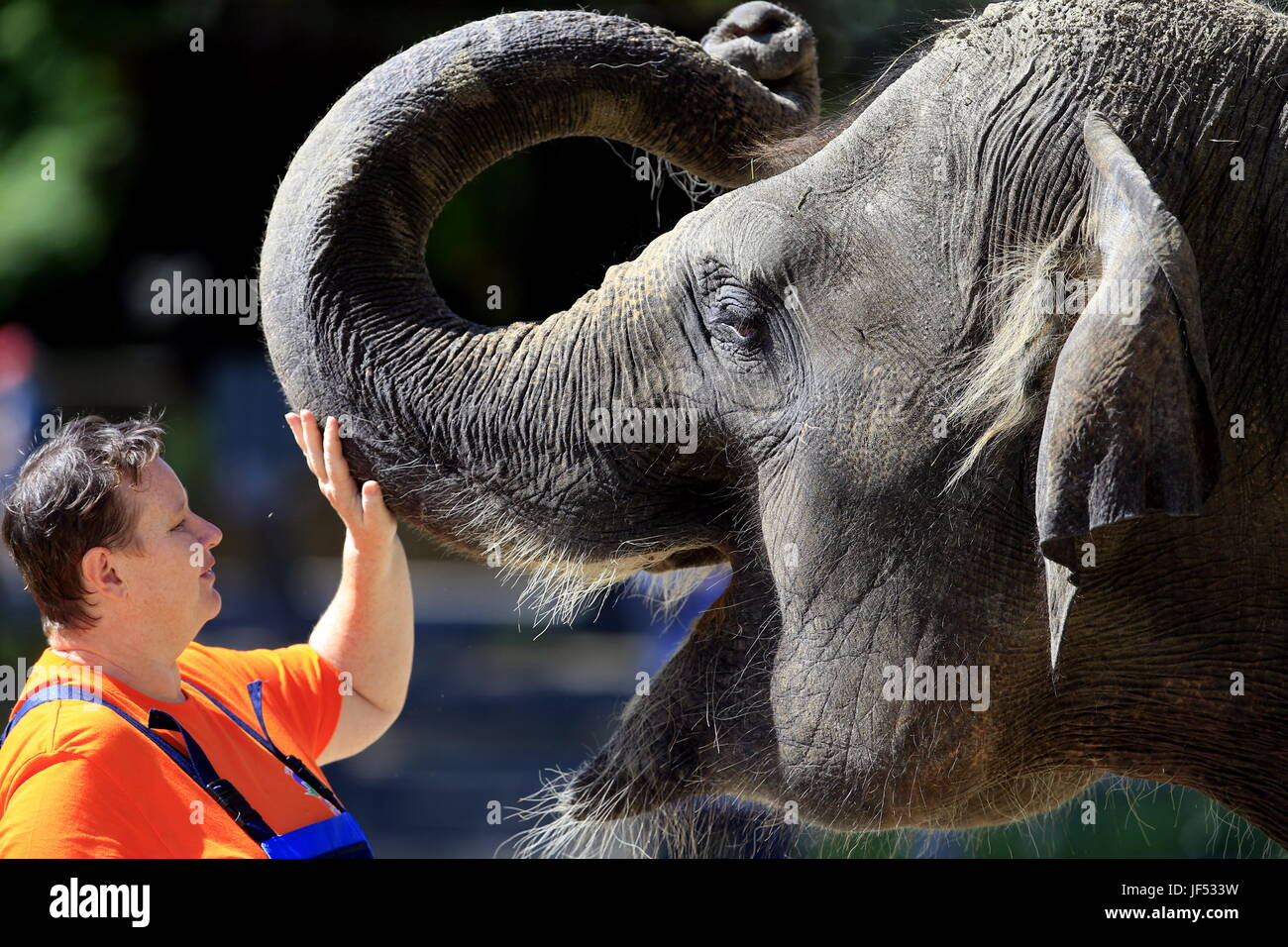 ROSTOV-ON-DON, RUSSIA – JUNE 28, 2017: Stroking an elephant at the Rostov-on-Don Zoo. Valery Matytsin/TASS - Stock Image