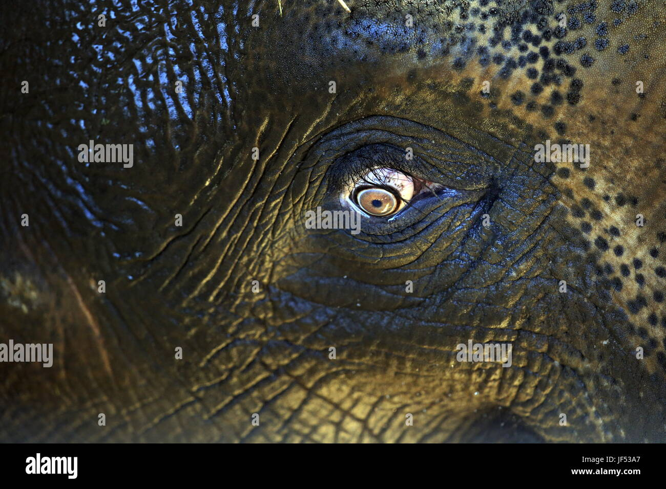 ROSTOV-ON-DON, RUSSIA – JUNE 28, 2017: An eye of an elephant at the Rostov-on-Don Zoo. Valery Matytsin/TASS - Stock Image