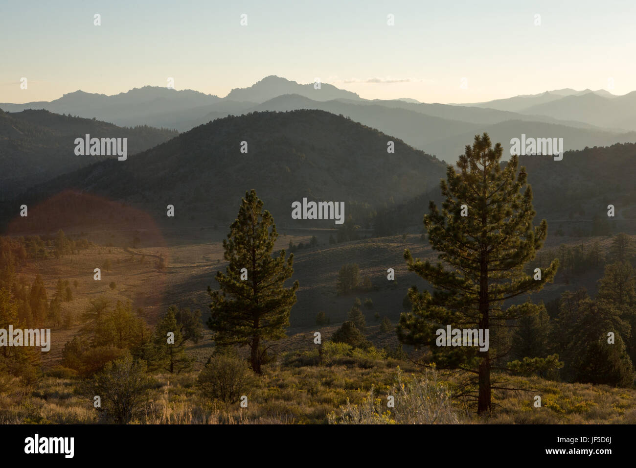A scenic view of mountains forested in evergreen trees in the El Dorado National Forest. - Stock Image
