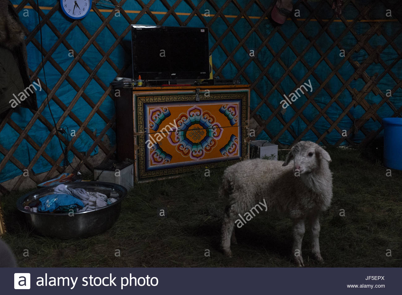 A flat screen television set and a sheep inside a traditional Mongolian ger. Today, many nomads use solar panels - Stock Image