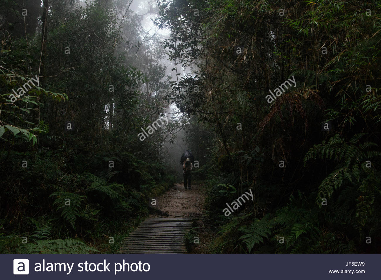 A porter walks in the jungles of Borneo, heading for Mount Kinabalu, one of the highest points in South East Asia. - Stock Image