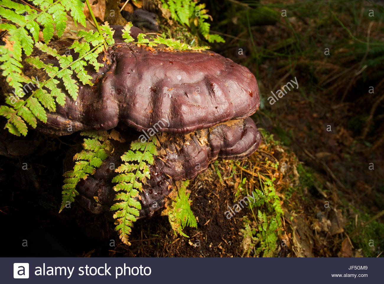 A fern enveloped by fungus. - Stock Image