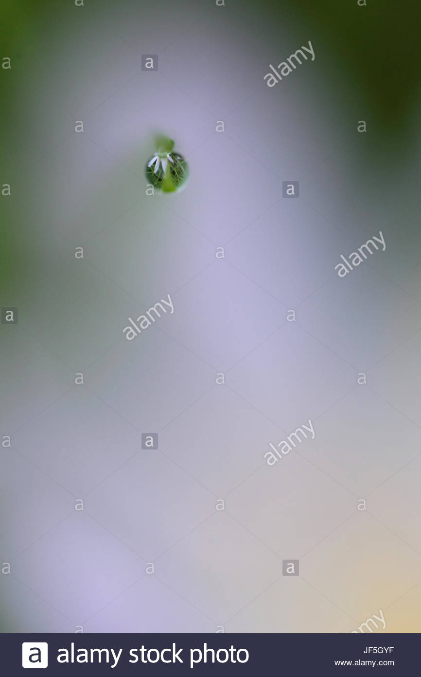 Close up of a drop of dew on the tip of a blade of grass. - Stock Image