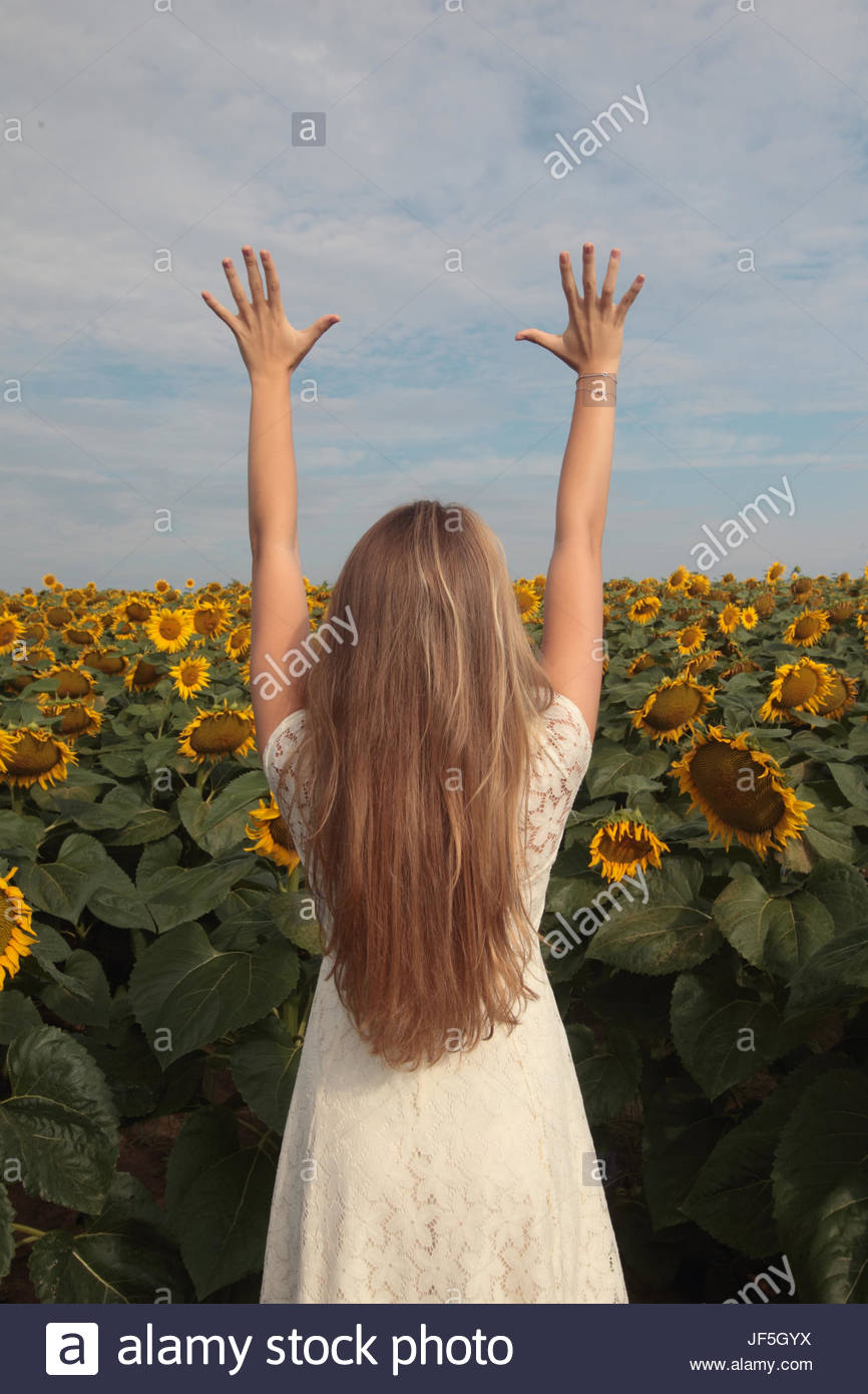 A seventeen-year-old girl reaching for the sky in a field of sunflowers, Helianthus annuus. - Stock Image