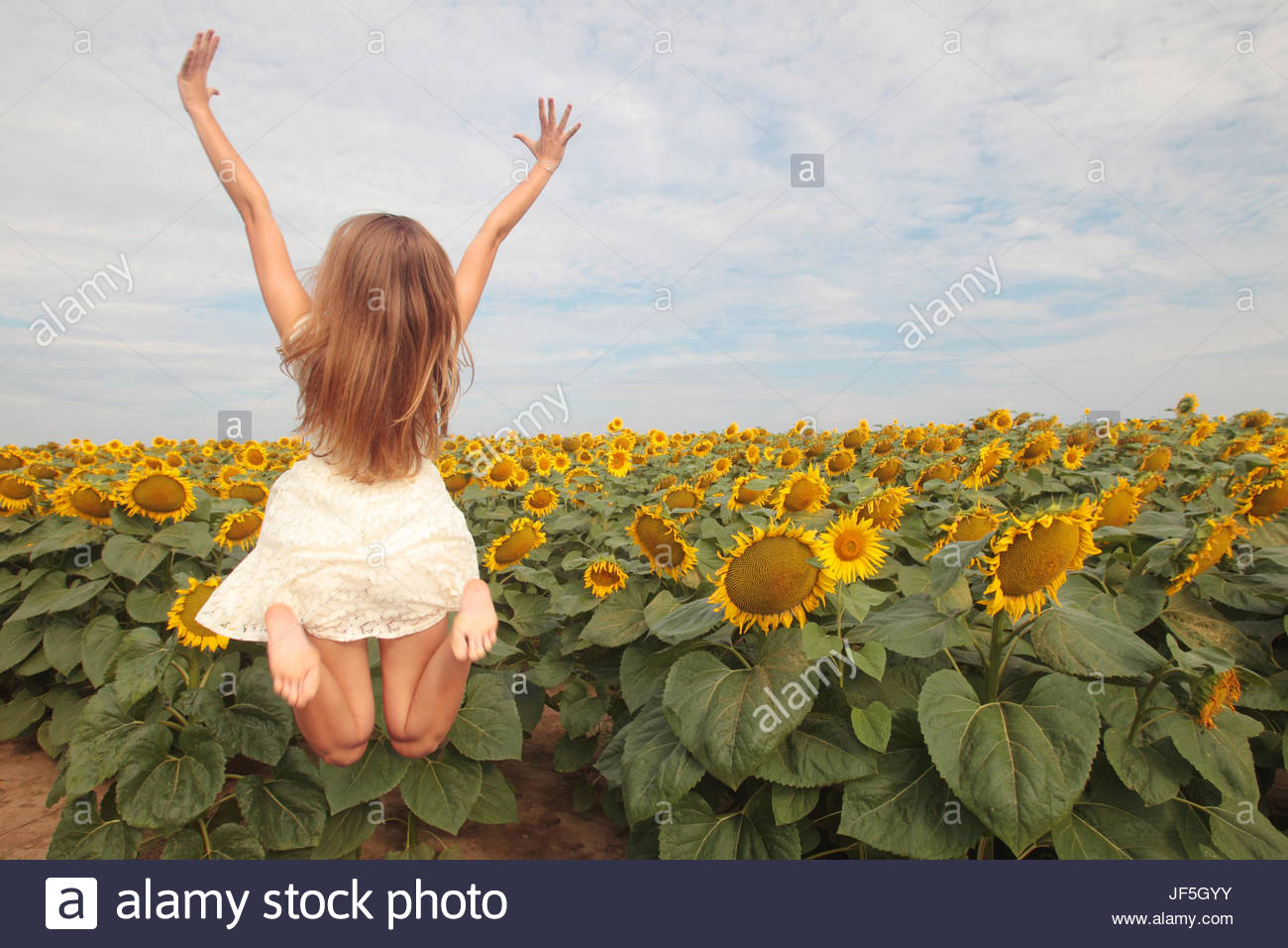 A seventeen-year-old girl reaching for the sky and jumping in a field of sunflowers, Helianthus annuus. - Stock Image