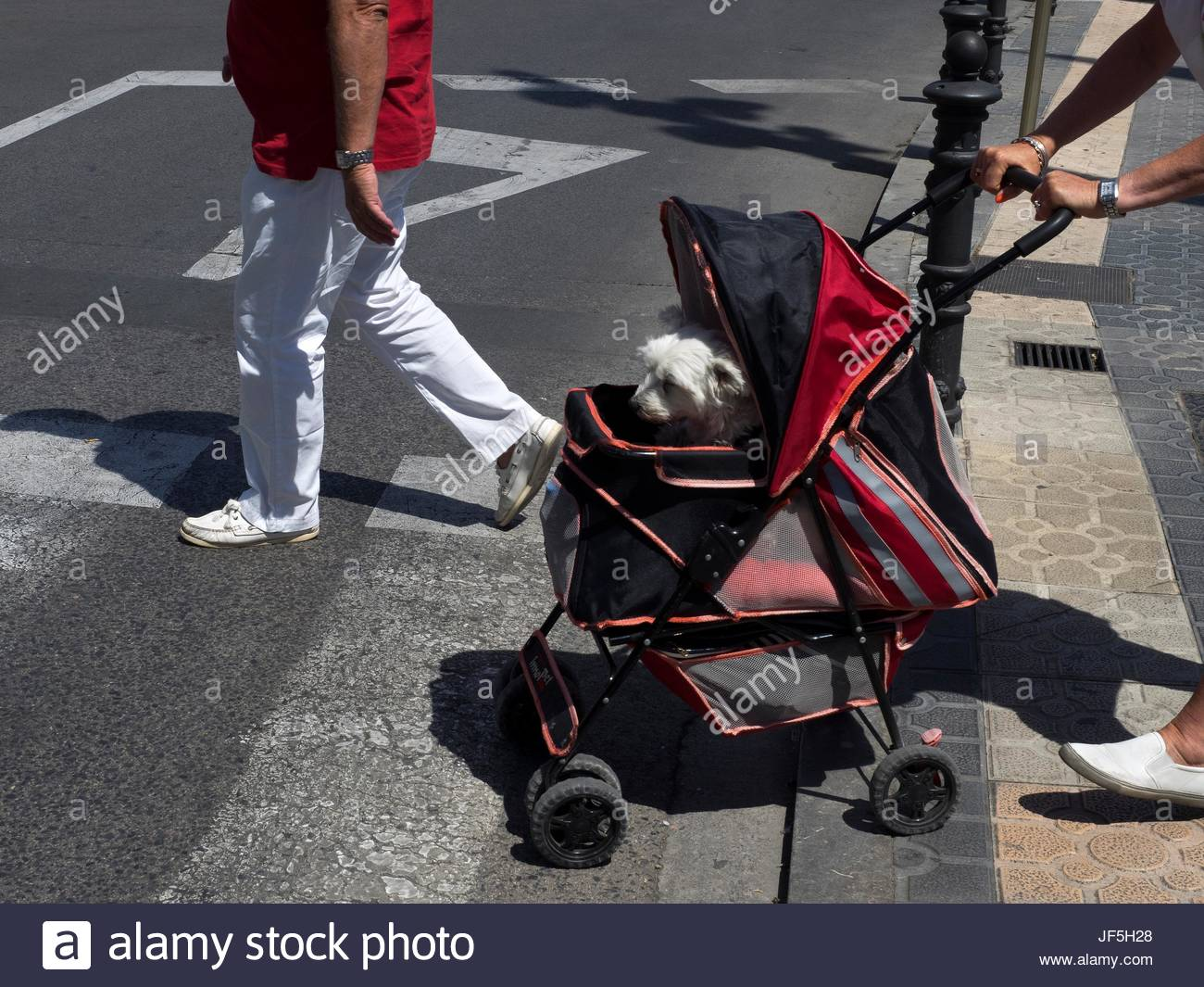 A dog in a stroller is pushed into a crosswalk. - Stock Image
