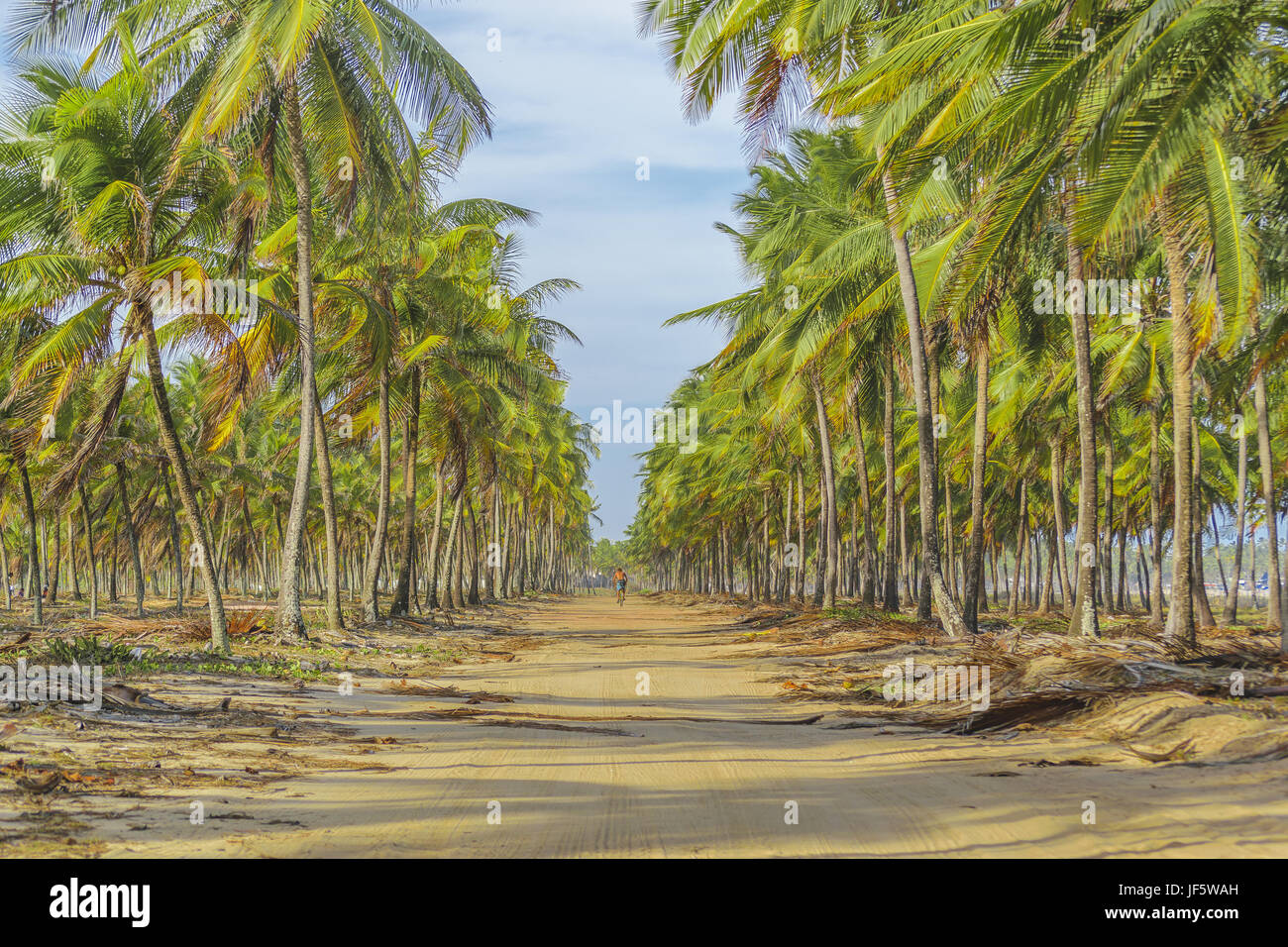 Earth Topical Road Porto Galinhas Brazil - Stock Image
