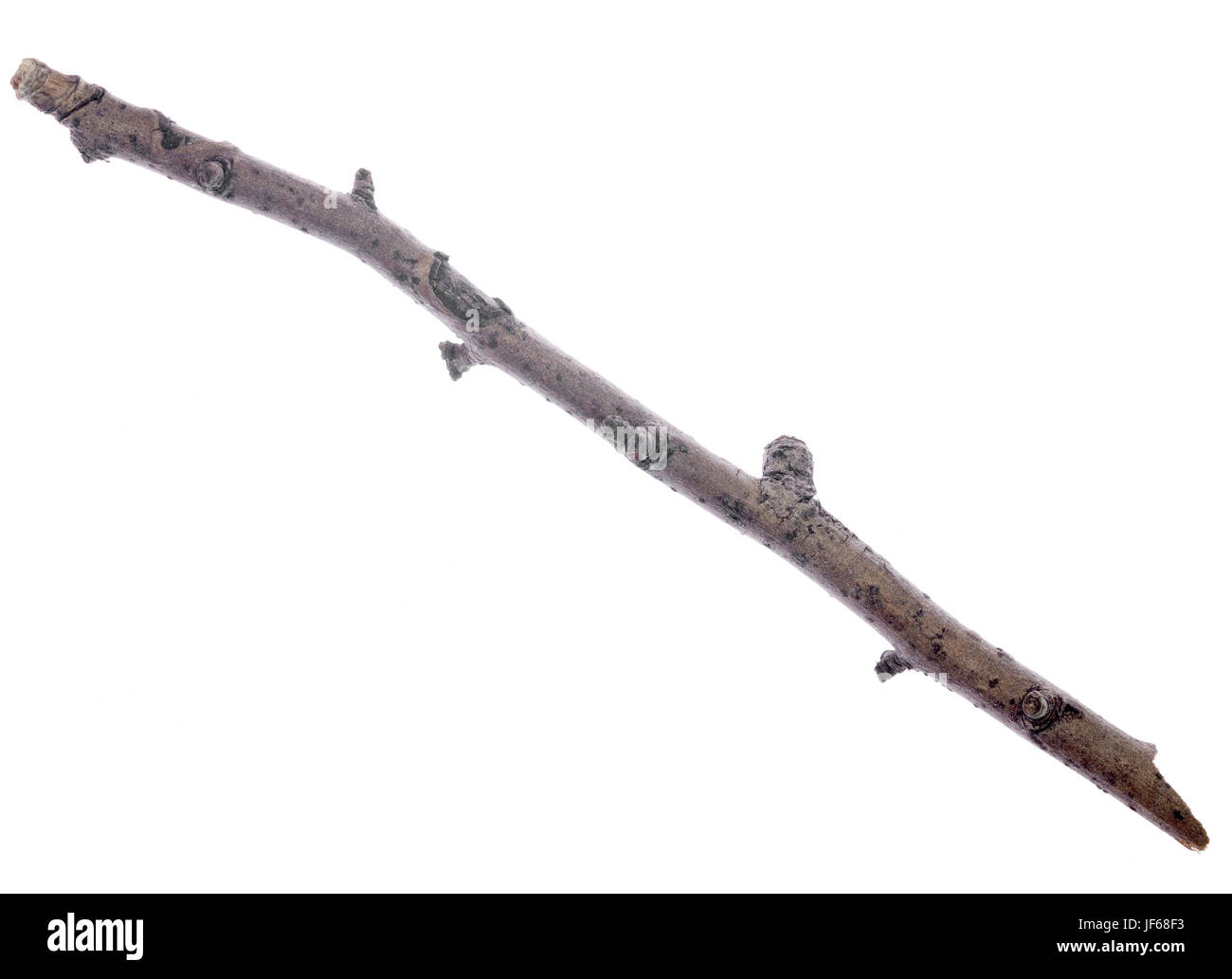 dry twig - Stock Image
