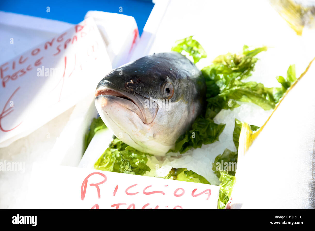 Ricciola in market - Stock Image