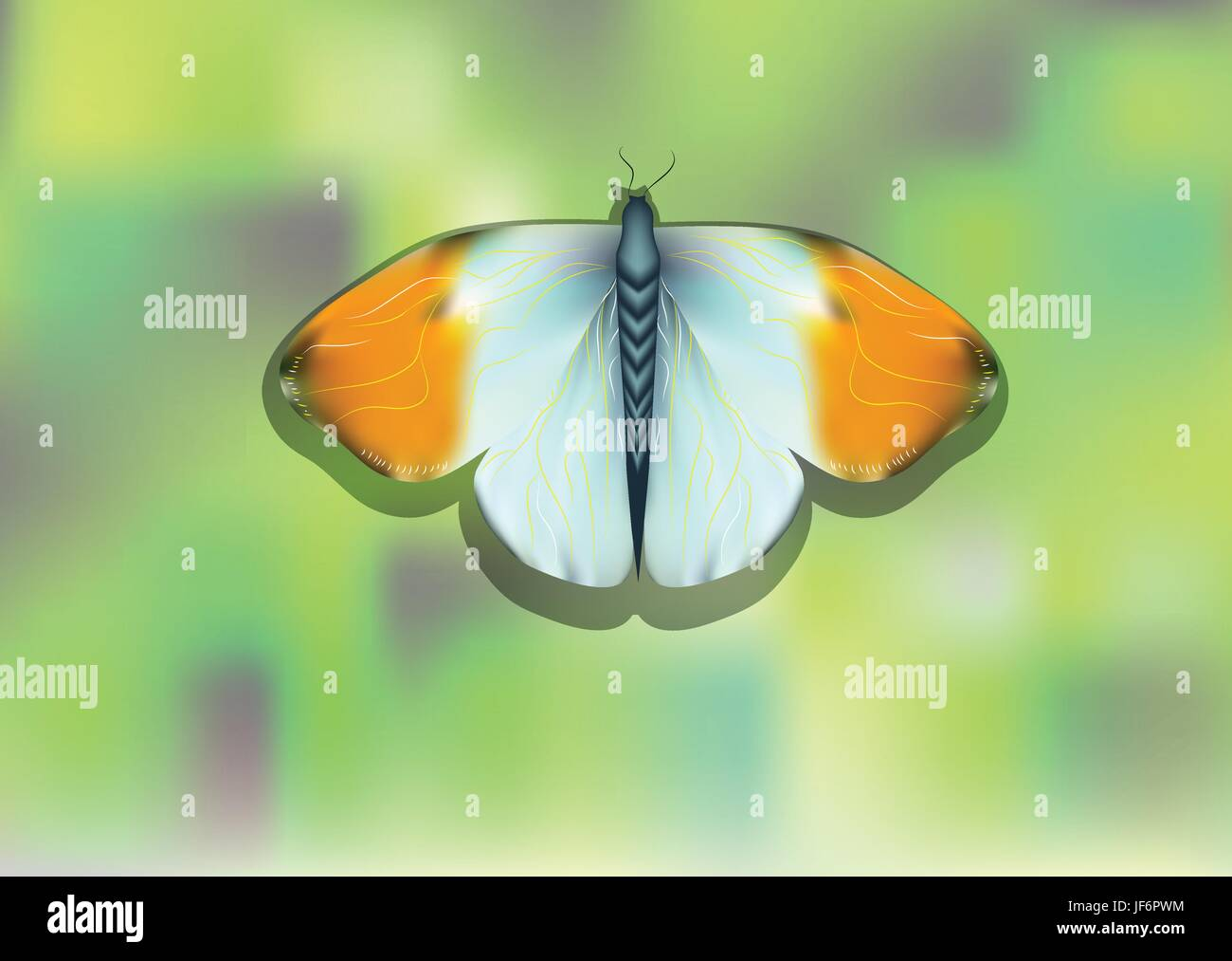 closeup, insect, butterfly, summer, summerly, wing, spring, illustration, - Stock Vector