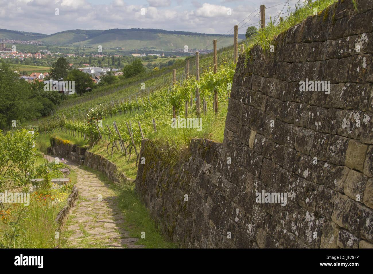 Vineyards in Kernen, Rems Valley, Deutschland - Stock Image