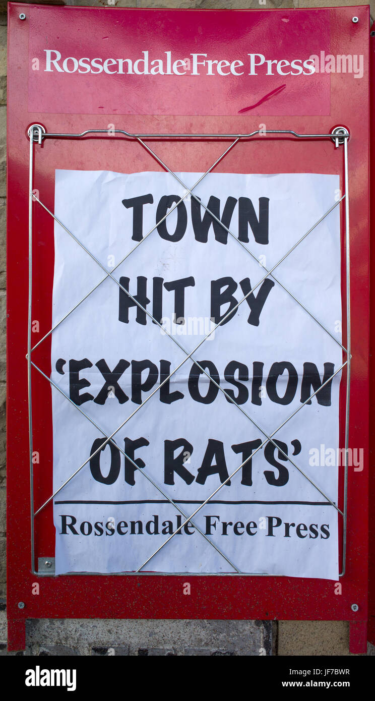 Newspaper headline poster announcing upsurge in rat population, Rawtenstall, Lancashire, UK Stock Photo