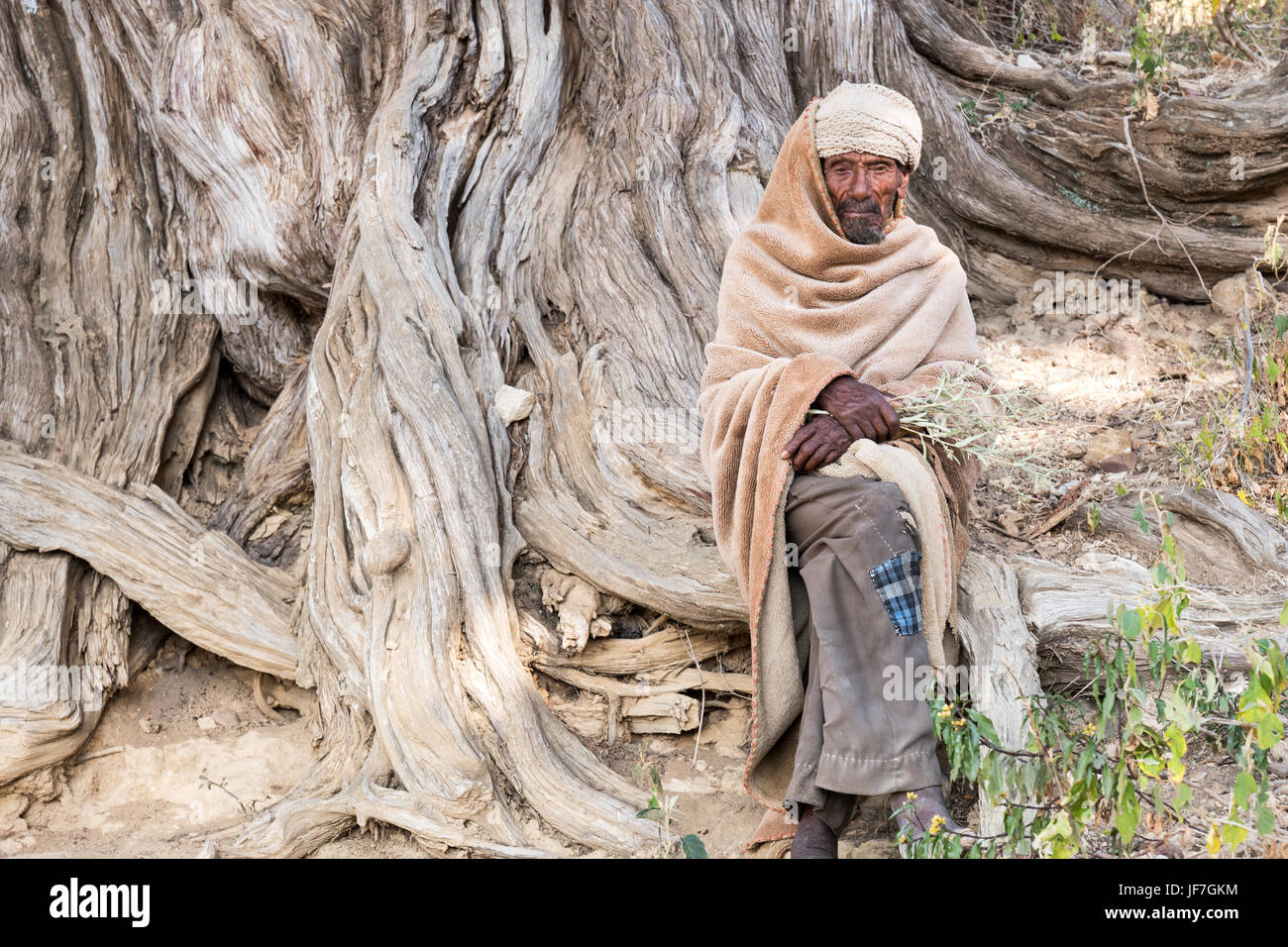 Adigrat, Ethiopia, An old farmer sitting on the roota of a tree in the village outskirts - Stock Image