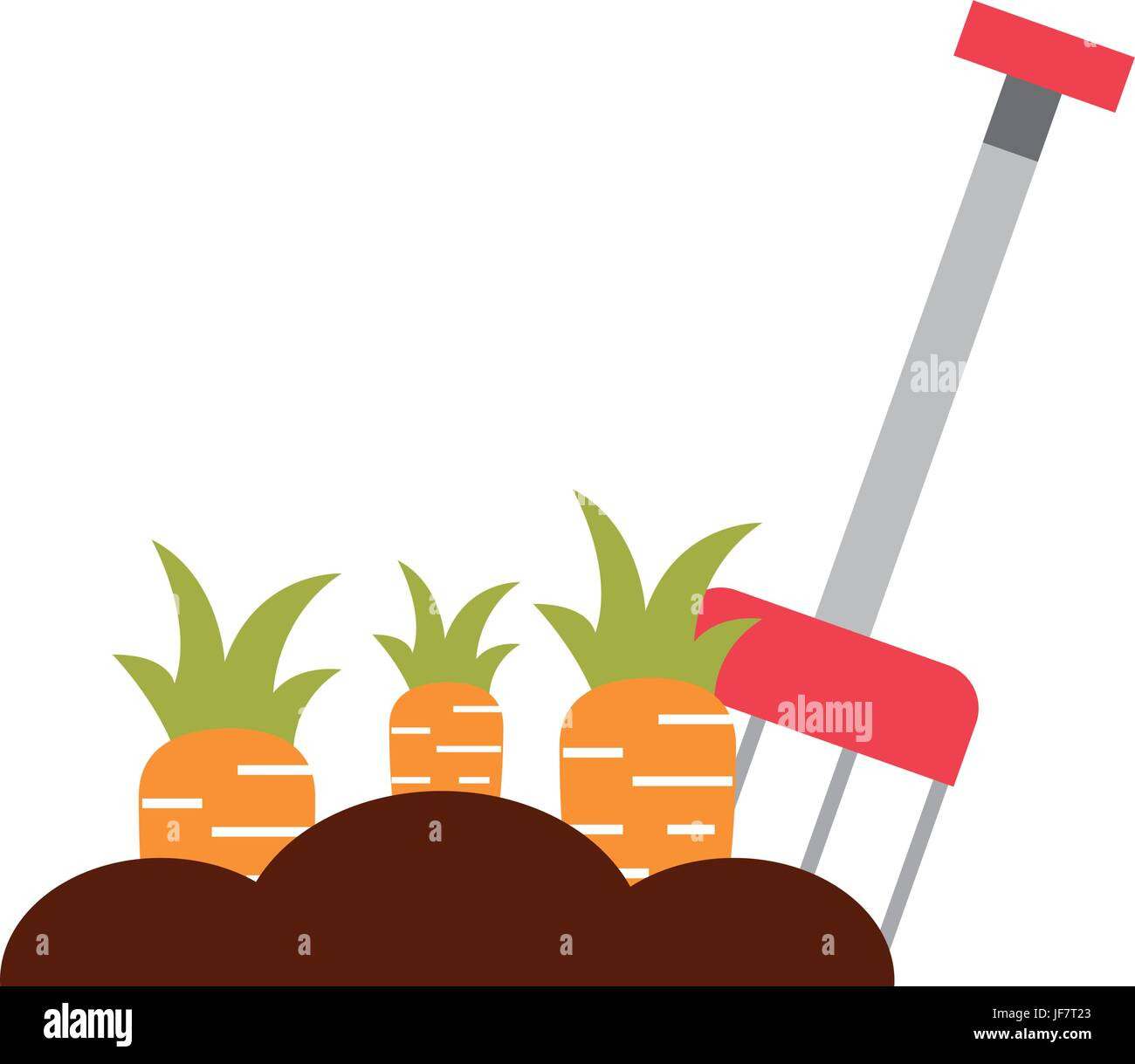farm rake with carrot cultivate - Stock Image