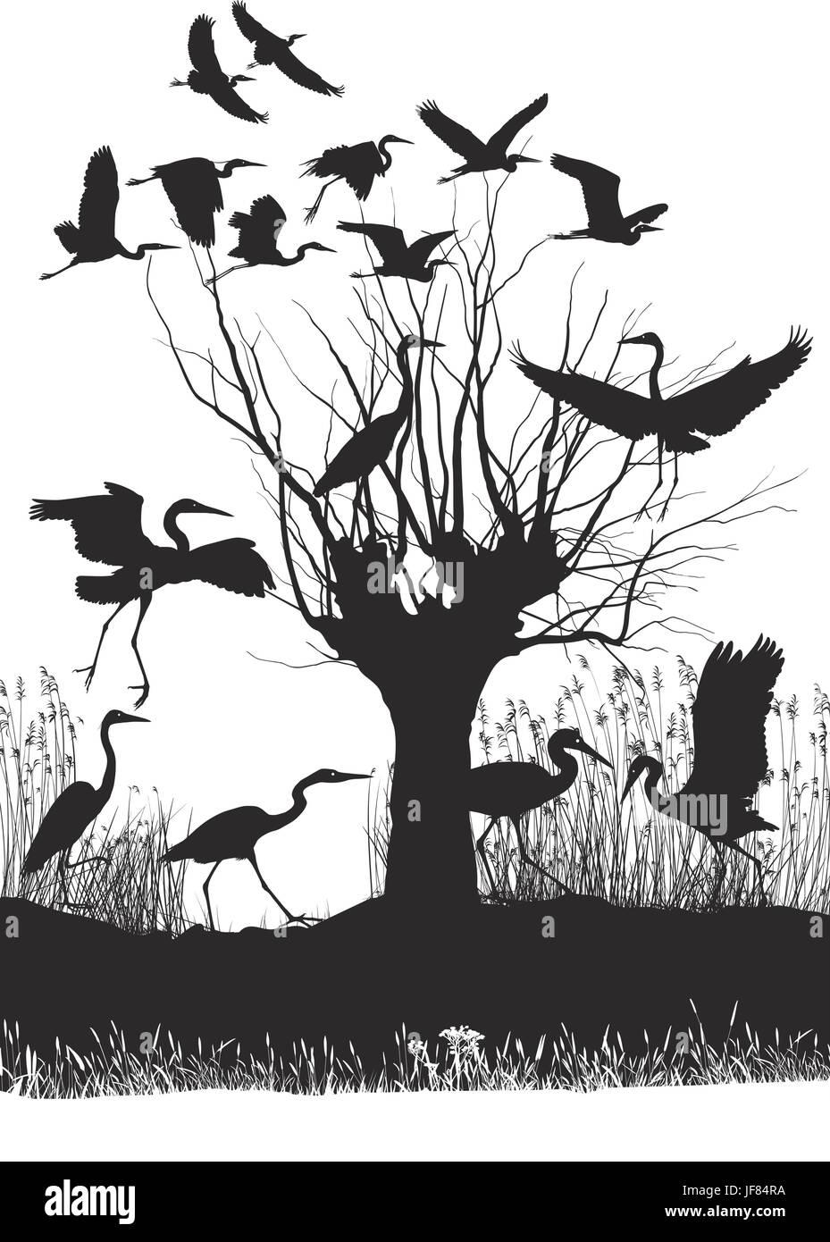 tree, bird, fauna, illustration, fresh water, lake, inland water, water, - Stock Vector