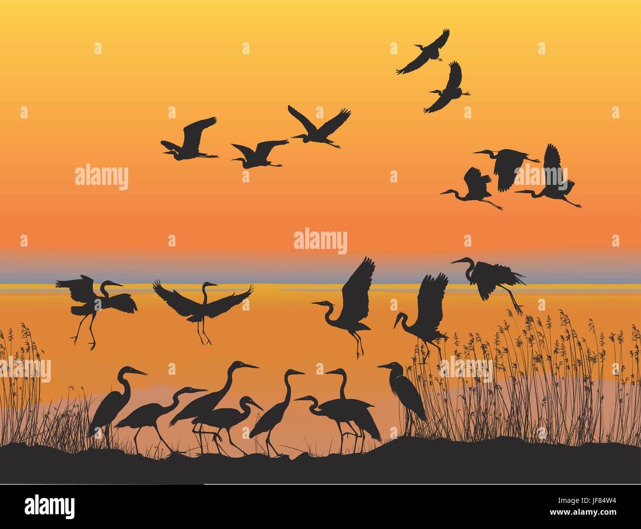 bird, sunset, fresh water, lake, inland water, water, aquatic, river, shore, - Stock Vector