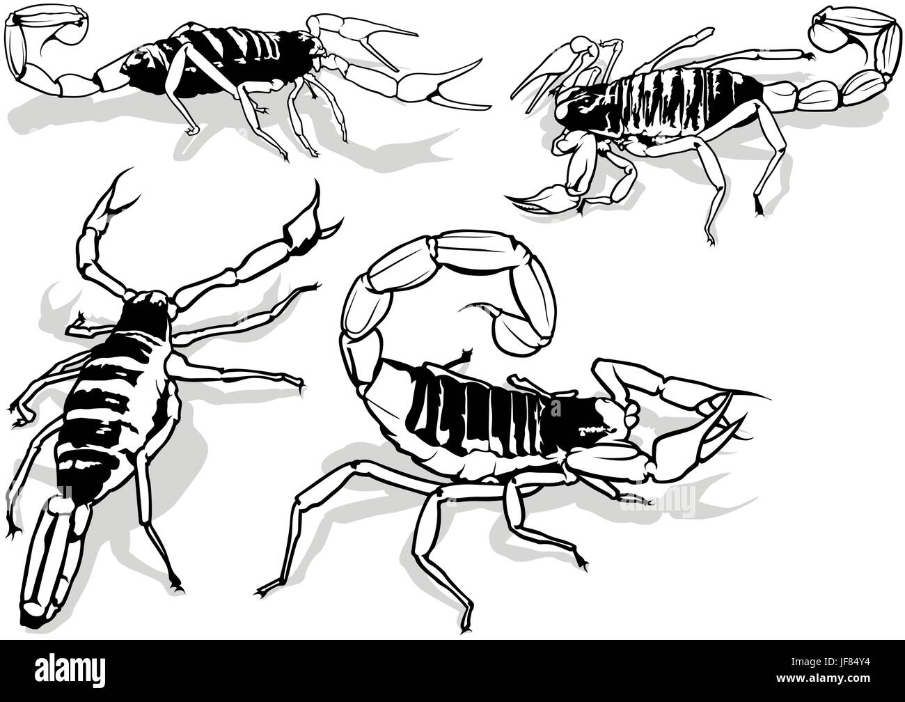 Desert Hairy Scorpion Stock Vector Art Illustration Vector Image