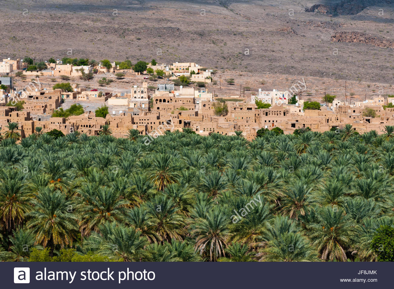 A distant view of the 400-year-old town of Al Hamra, and a stand of palm trees. - Stock Image