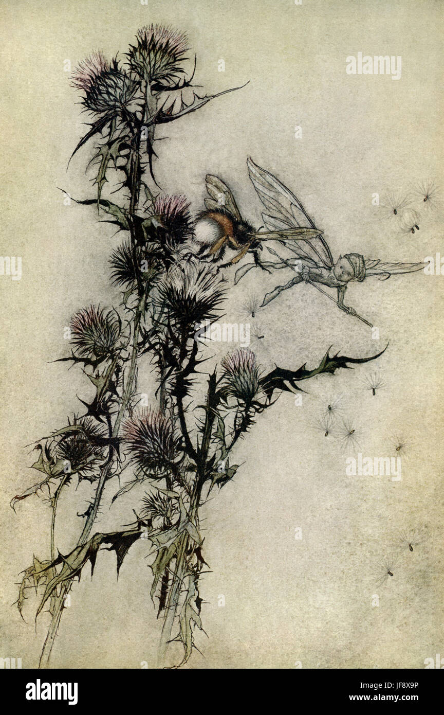 A Midsummer Night's Dream. Illustration by Arthur Rackham (1867 - 1939) to the play by William Shakespeare. - Stock Image