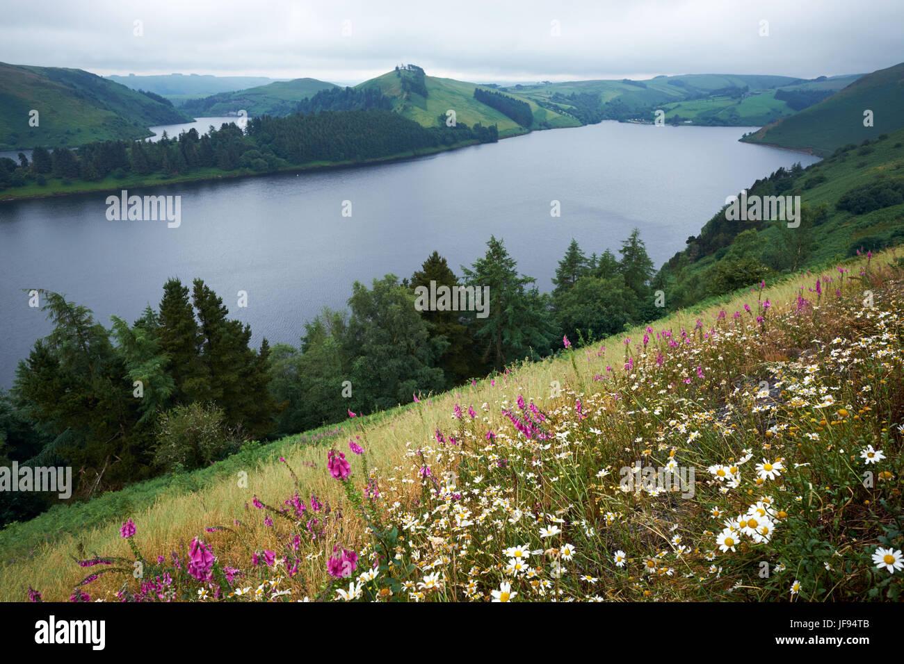 Llyn Clywedog Reservoir near Llanidloes Powys Wales - Stock Image