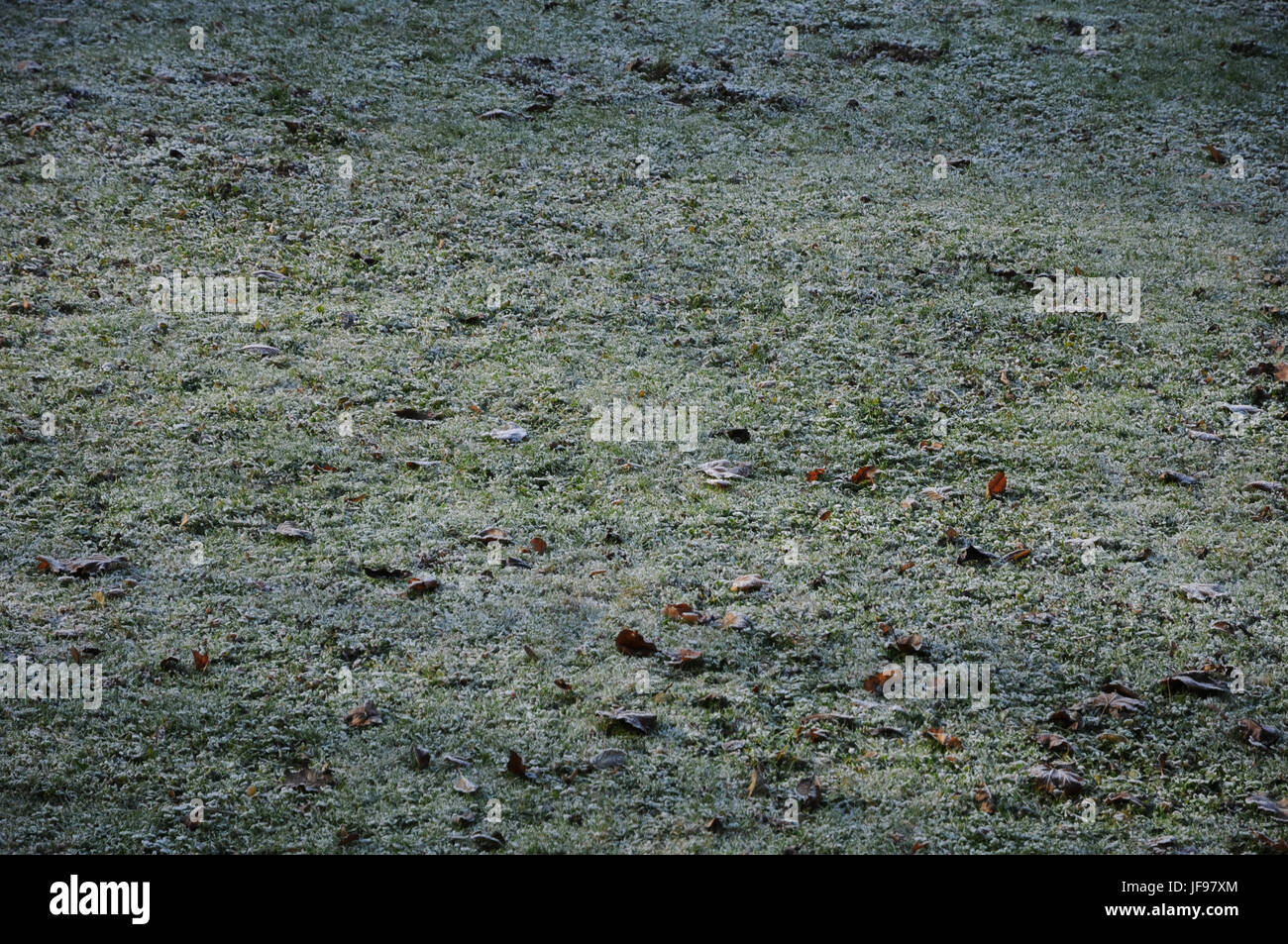 Lawn with white frost Stock Photo
