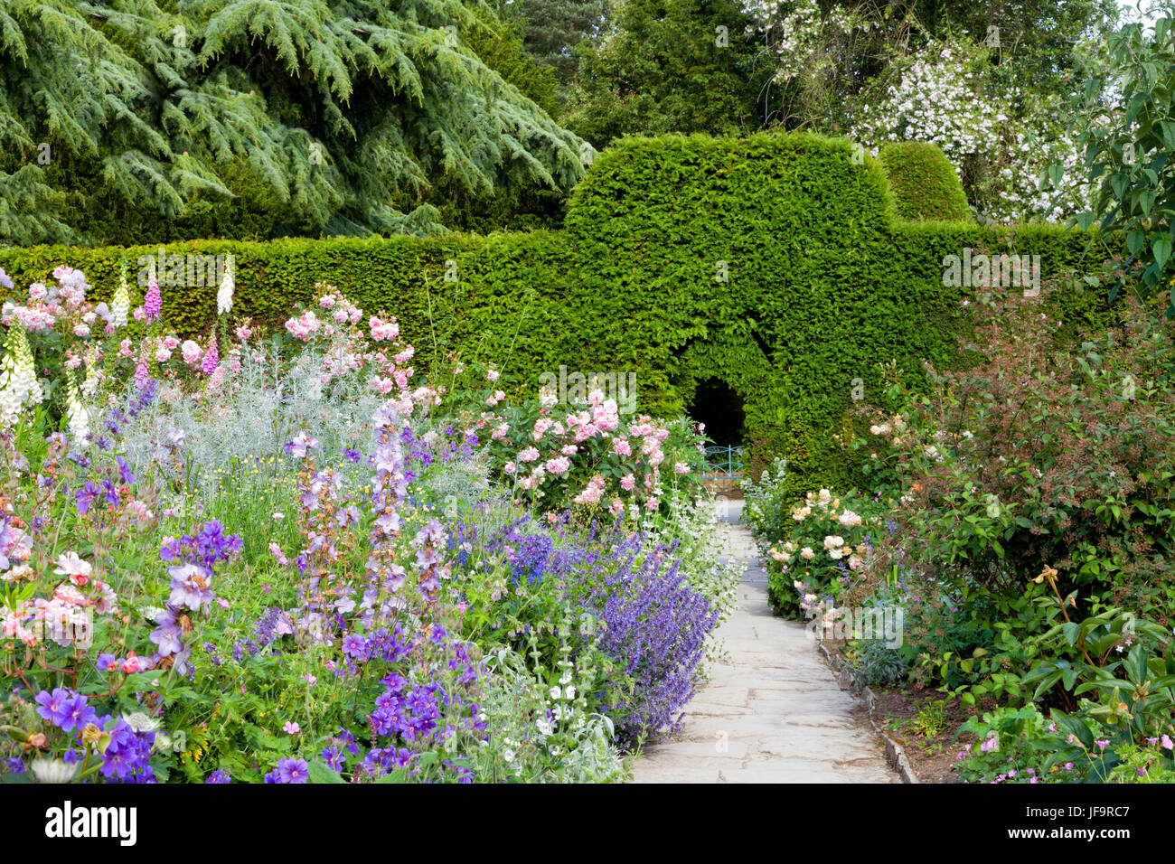 Summer colourful  garden with a walking path through flowers in bloom and green trimmed hedge . - Stock Image