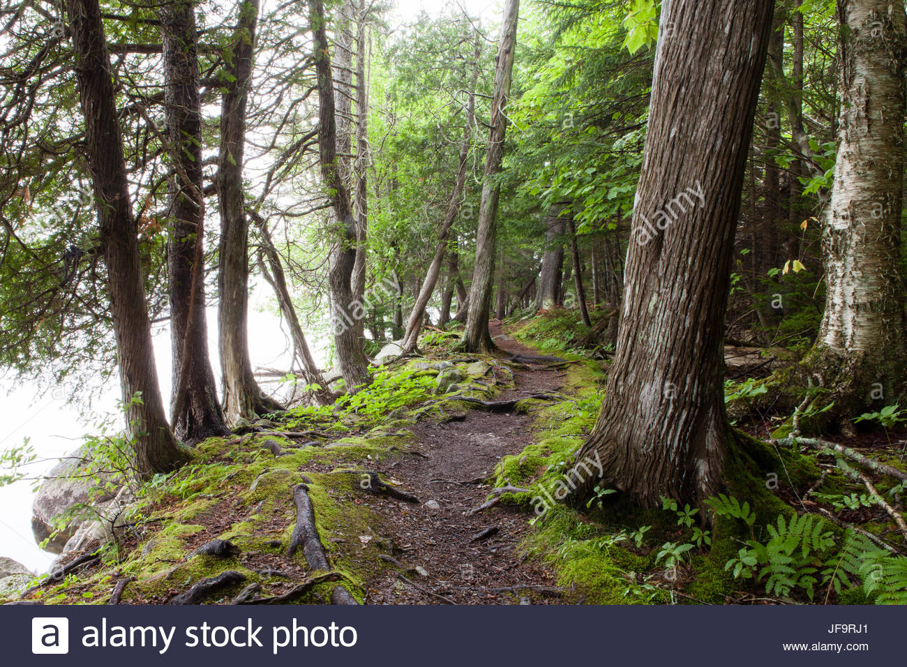 A hiking trail along Long Pond in Acadia National Park in Maine. - Stock Image