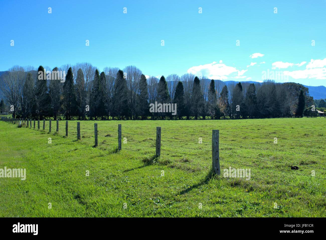 Beautiful countryside with green grass, trees and blue sky and mountain top in the far background in New South Wales - Stock Image
