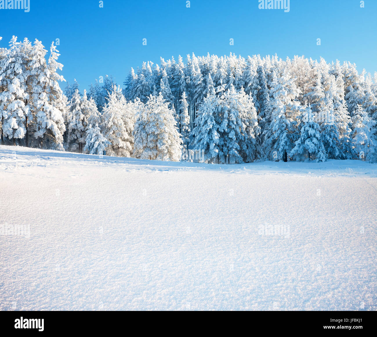 Winter park in snow Stock Photo