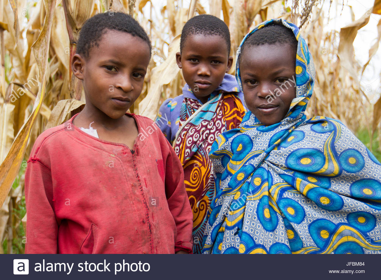 Three young girls standing in a corn field. - Stock Image