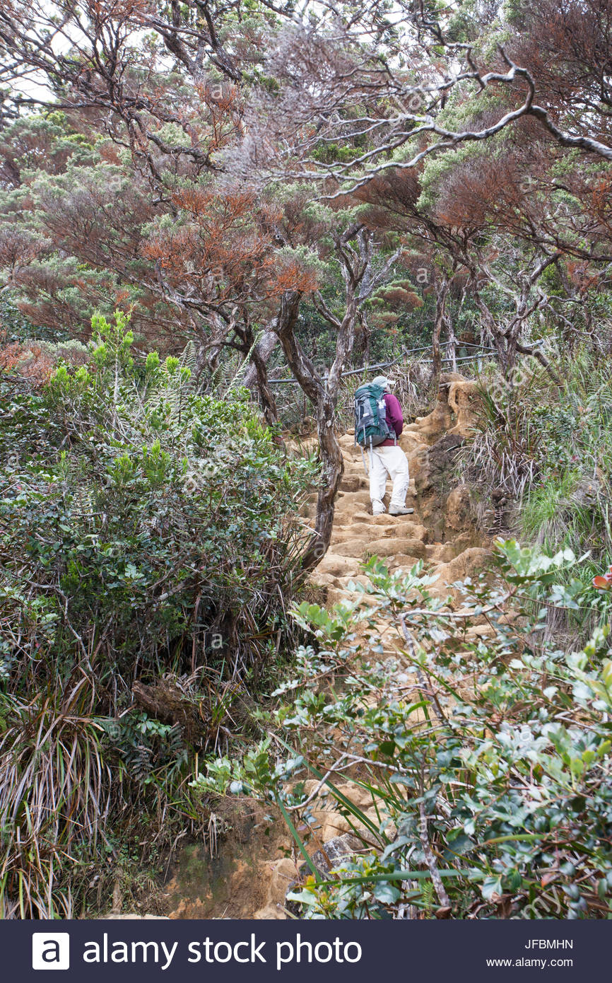 A hiker on the Kinabalu Summit Trail in Kinabalu National Park. - Stock Image
