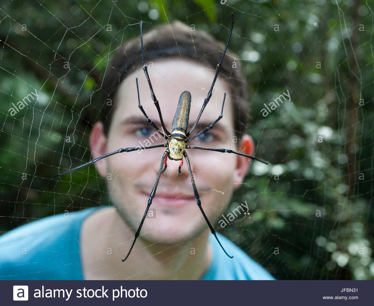 A man stands behind a golden orb spider, Nephiladae, on a web. - Stock Image