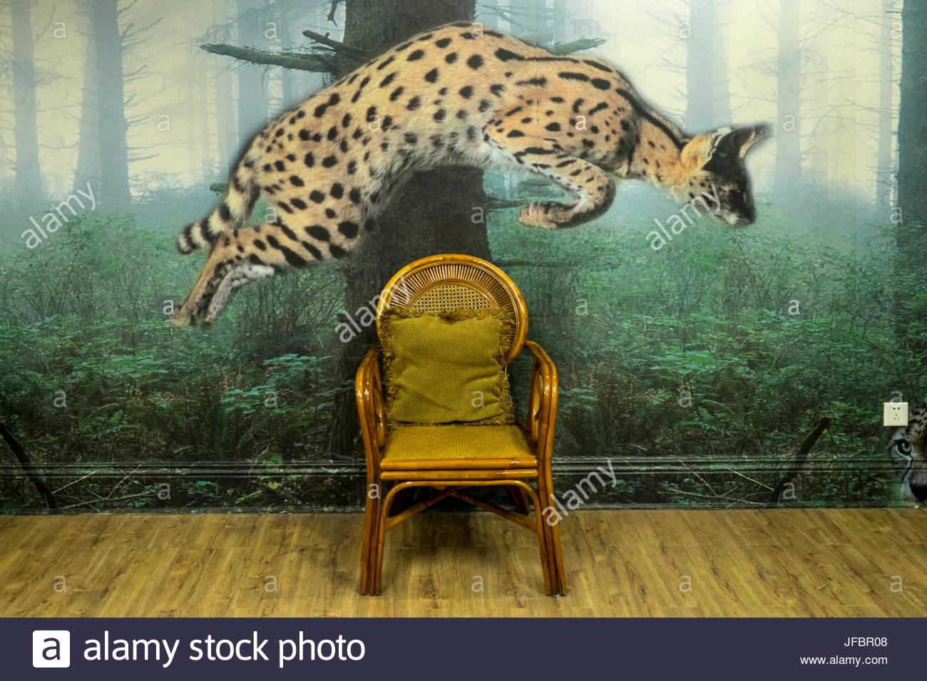 Wall paper of a leaping cat above a chair at the Chateau Laffitte Hotel. - Stock Image