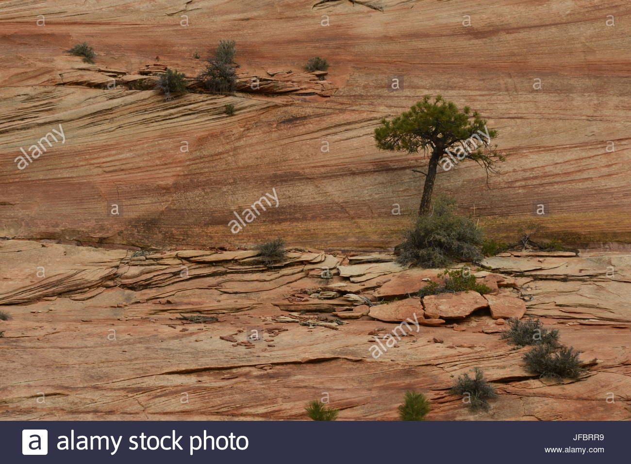 Trees and shrubs dot the landscape of Zion National Park. - Stock Image