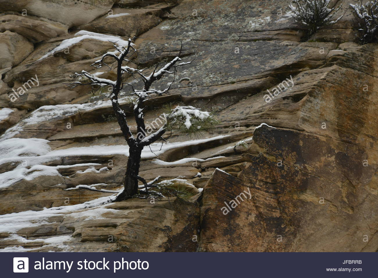 Snow in Zion National Park. - Stock Image