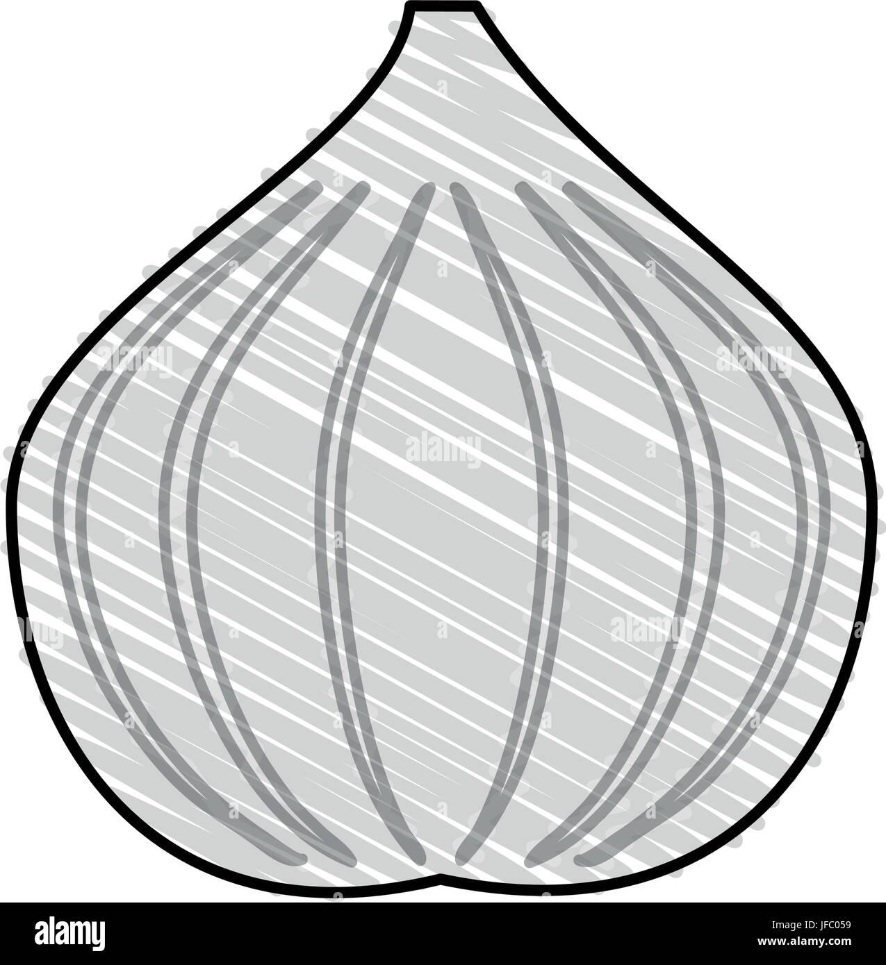 garlic vector illustration - Stock Vector