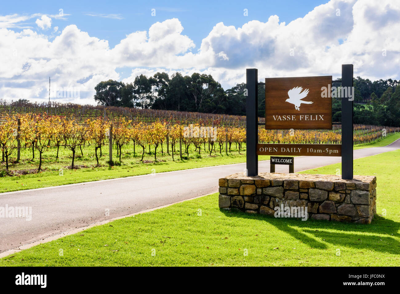 Winter vines around the entrance to Vasse Felix Vineyard in the Margaret River Region of Australia's South West, - Stock Image