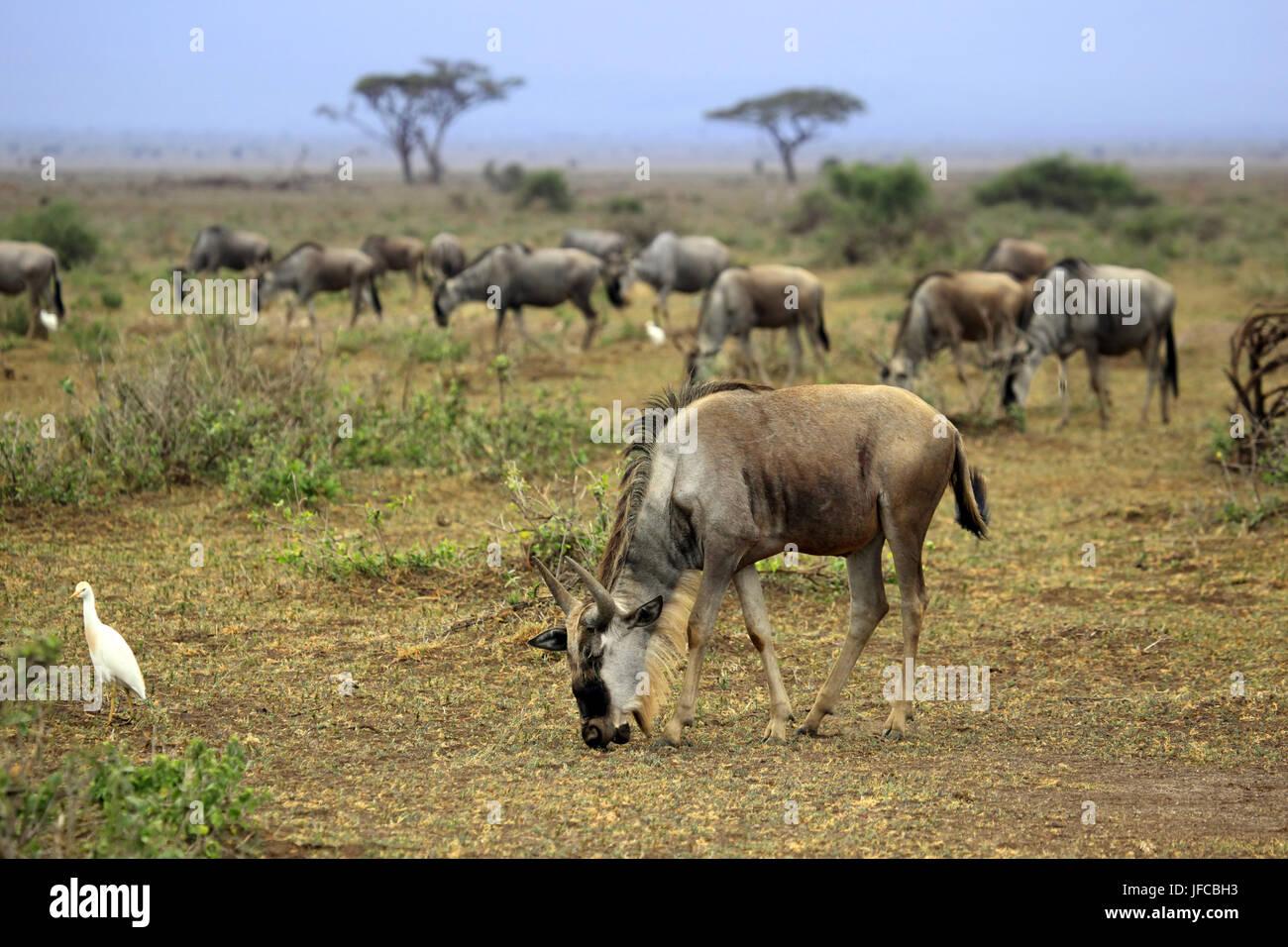 Kenia Safari People Stock Photos & Kenia Safari People