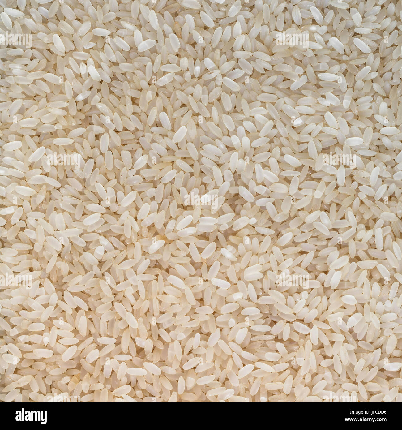 Grain rice background - Stock Image