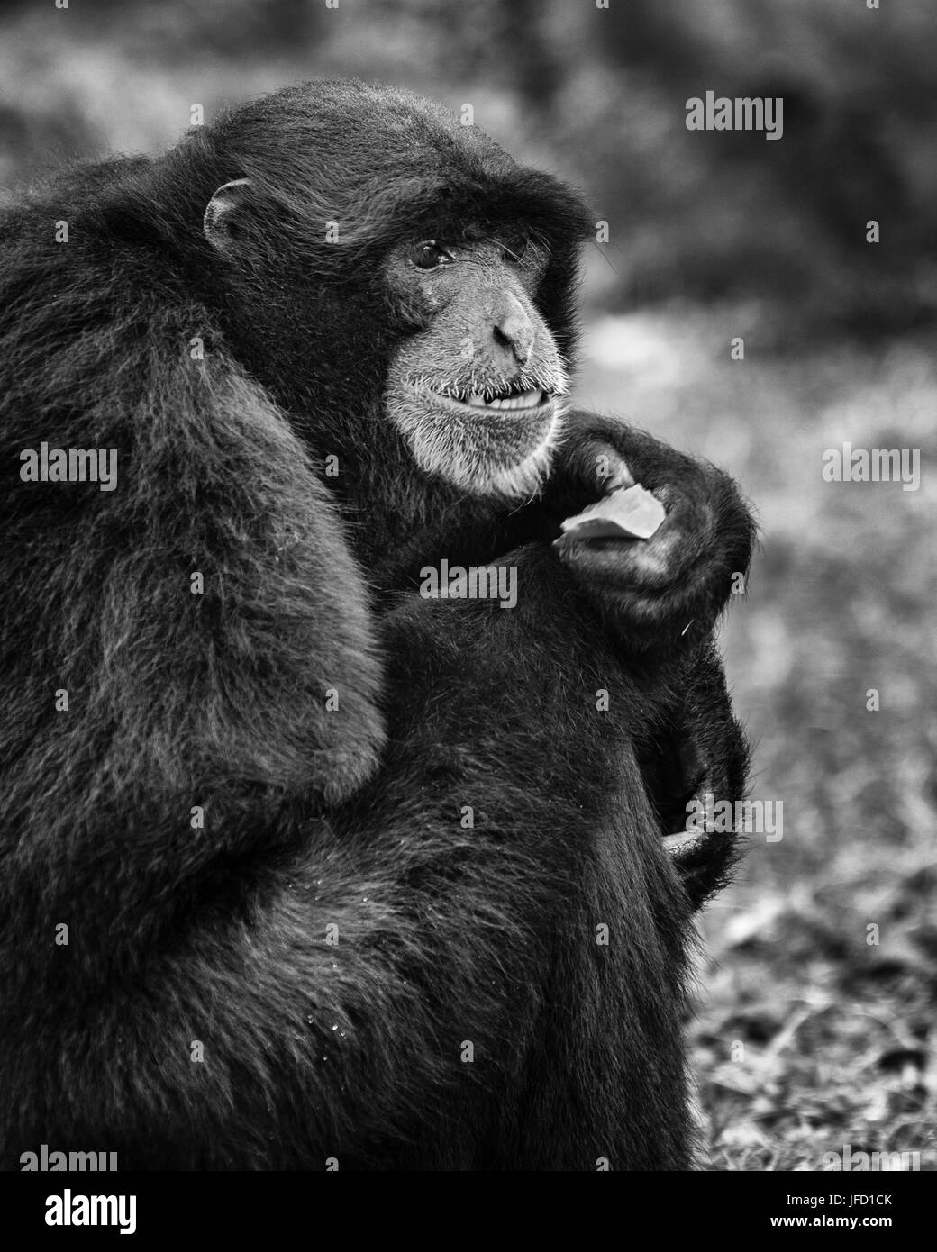 Mueller Gibbon thinking - Stock Image