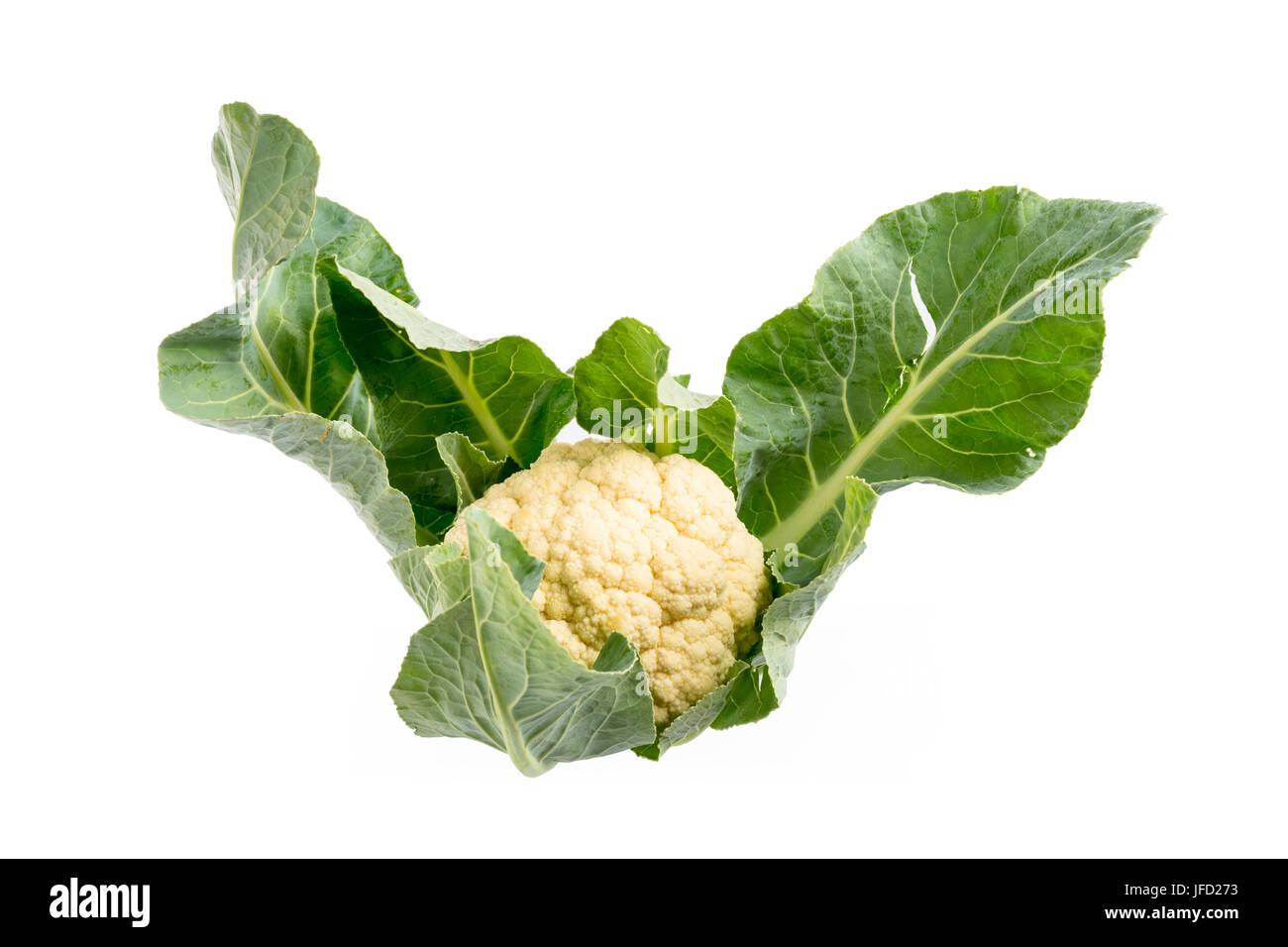 cauliflower on white - Stock Image