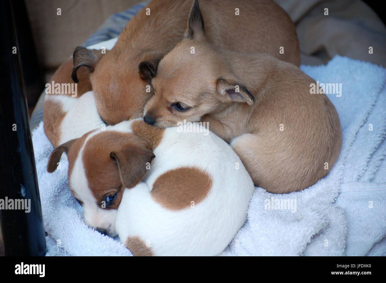 A litter of puppies - Stock Image