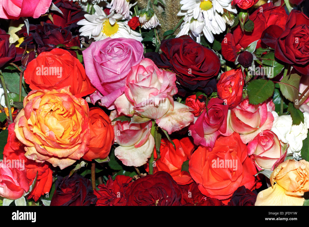Big bouquet of roses - Stock Image