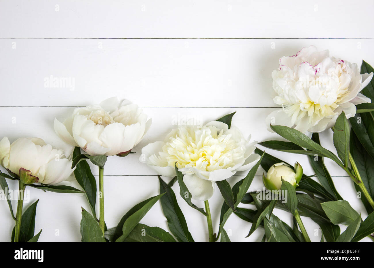 White Peonies Flower On White Rustic Wooden Background With Blank